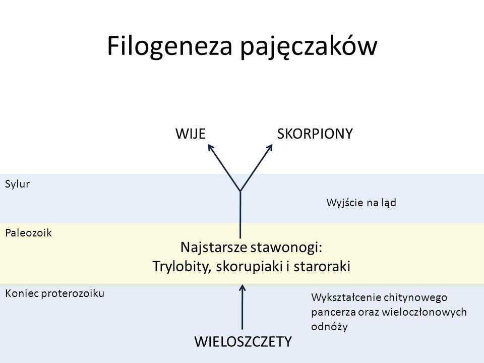 Filogeneza pajęczaków