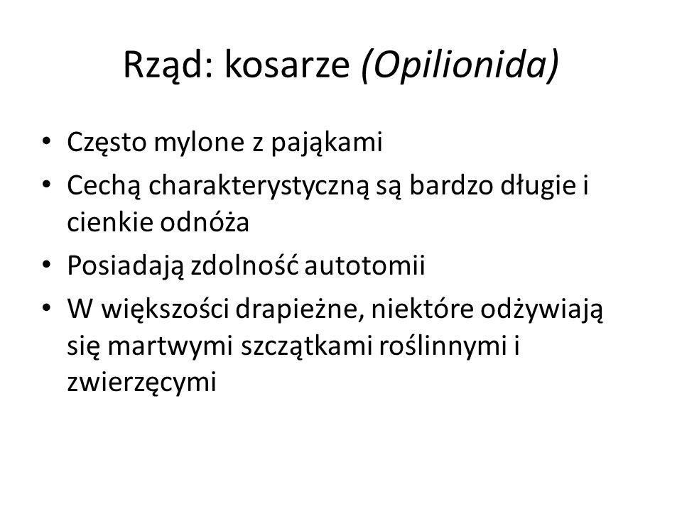 Rząd: kosarze (Opilionida)
