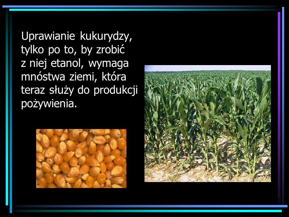 Uprawianie kukurydzy, tylko po to, by zrobić z niej etanol, wymaga mnóstwa ziemi, która teraz służy do produkcji pożywienia.