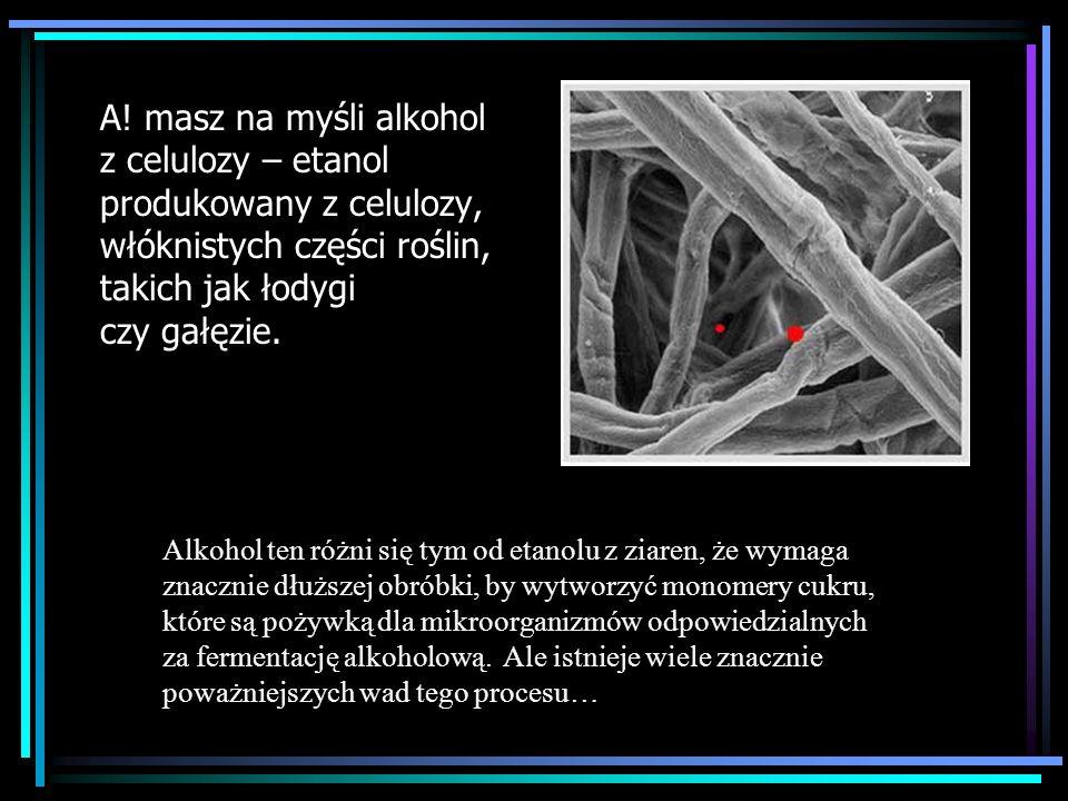 A! masz na myśli alkohol z celulozy – etanol produkowany z celulozy, włóknistych części roślin, takich jak łodygi czy gałęzie.