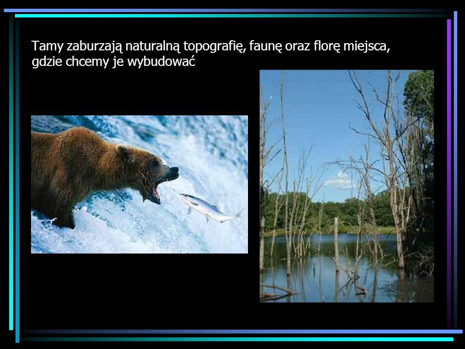 Tamy zaburzają naturalną topografię, faunę oraz florę miejsca, gdzie chcemy je wybudować