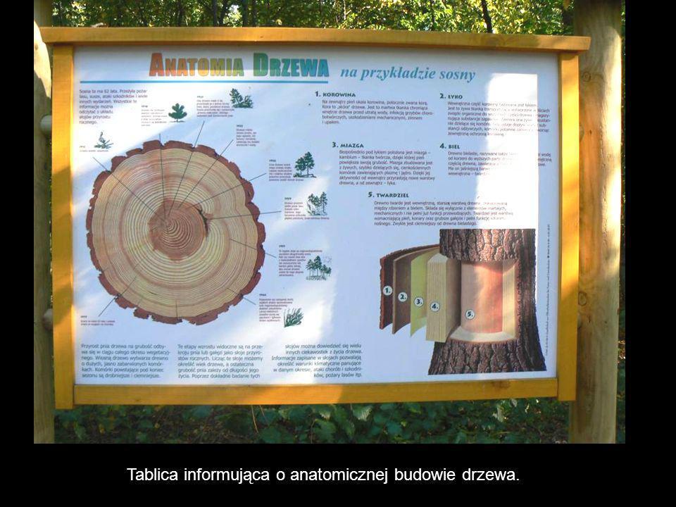 Tablica informująca o anatomicznej budowie drzewa.