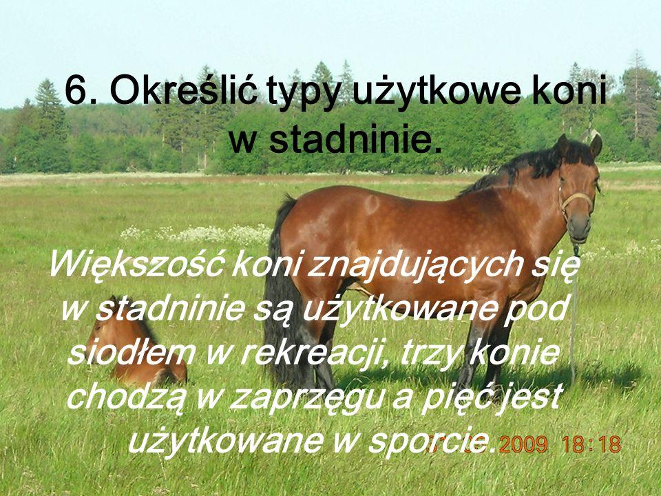 6. Określić typy użytkowe koni w stadninie.