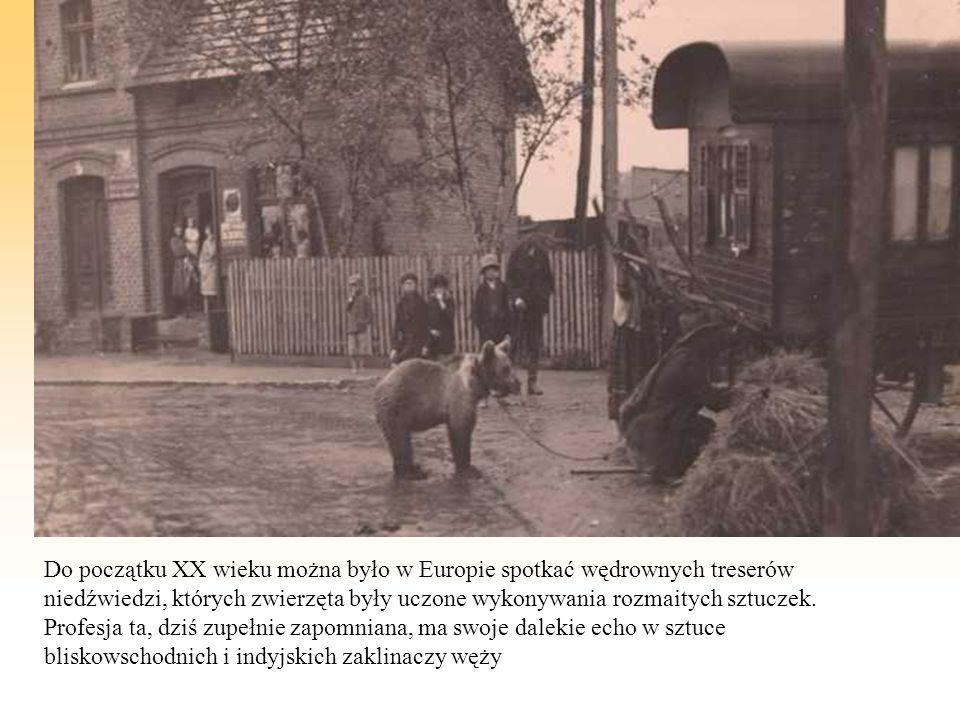 Do początku XX wieku można było w Europie spotkać wędrownych treserów niedźwiedzi, których zwierzęta były uczone wykonywania rozmaitych sztuczek.