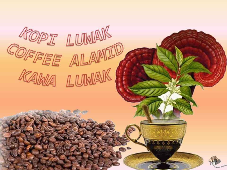 KOPI LUWAK COFFEE ALAMID KAWA LUWAK