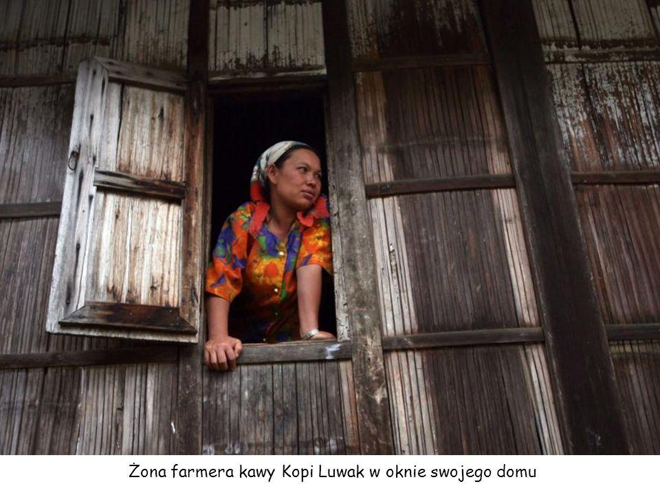 Żona farmera kawy Kopi Luwak w oknie swojego domu