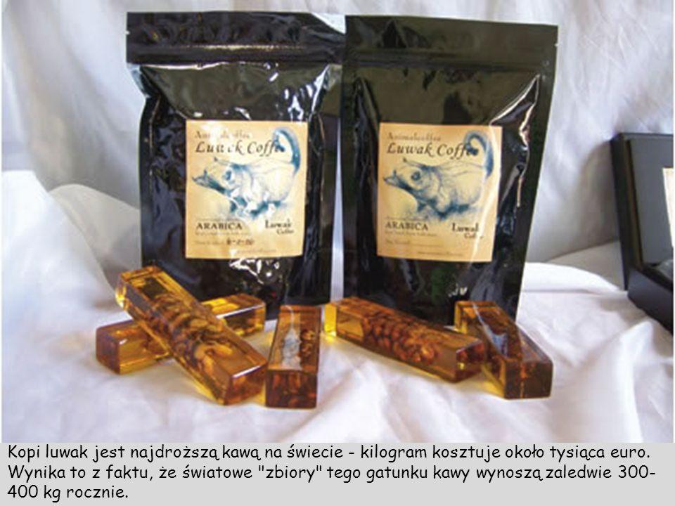 Kopi luwak jest najdroższą kawą na świecie - kilogram kosztuje około tysiąca euro.