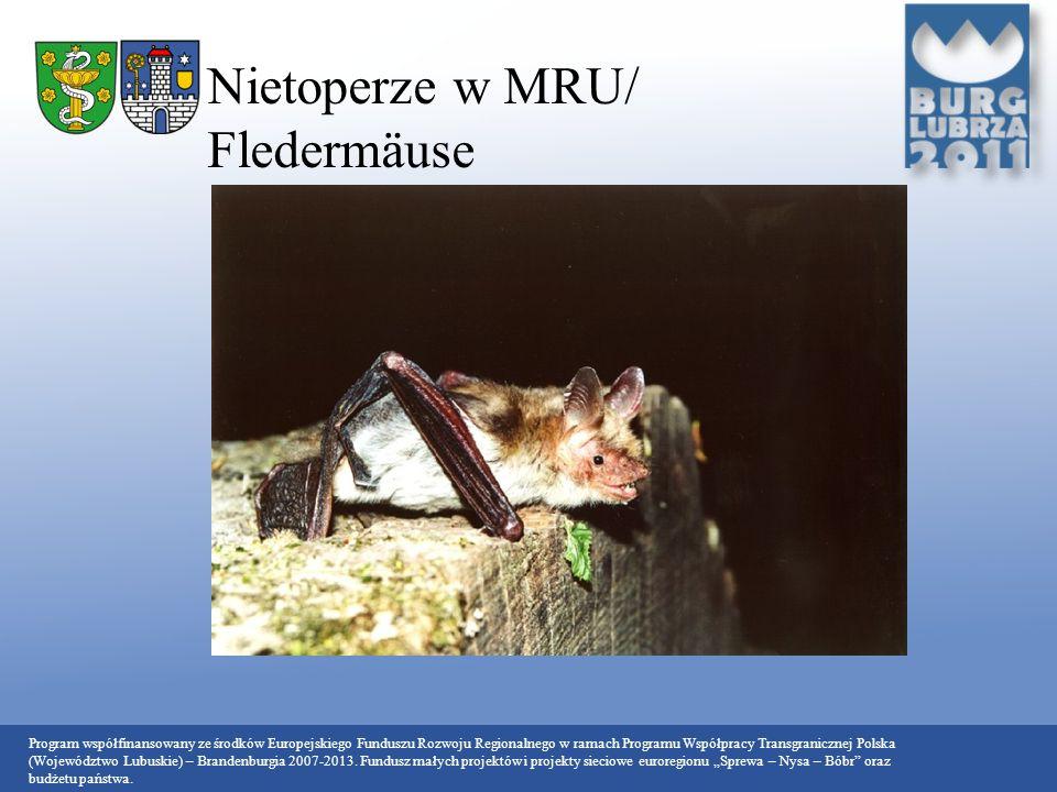 Nietoperze w MRU/ Fledermäuse