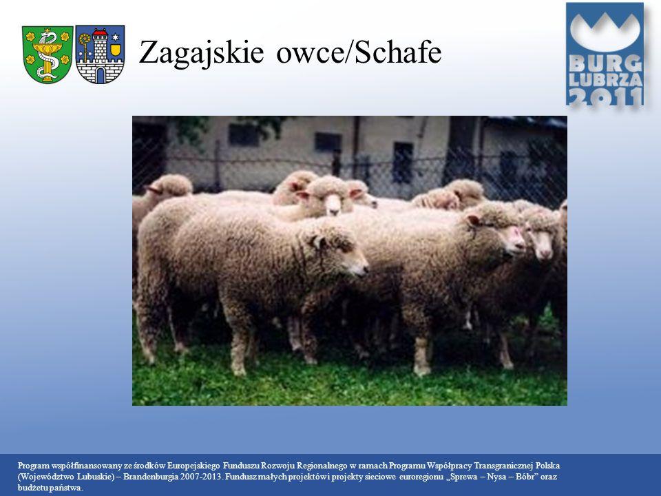 Zagajskie owce/Schafe