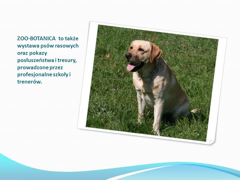 ZOO-BOTANICA to także wystawa psów rasowych oraz pokazy posłuszeństwa i tresury, prowadzone przez profesjonalne szkoły i trenerów.