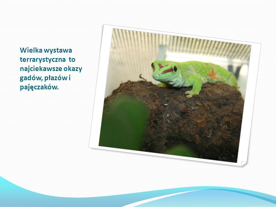 Wielka wystawa terrarystyczna to najciekawsze okazy gadów, płazów i pajęczaków.