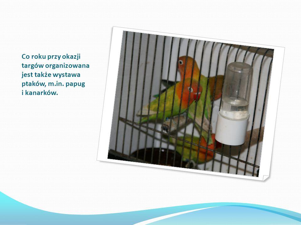 Co roku przy okazji targów organizowana jest także wystawa ptaków, m