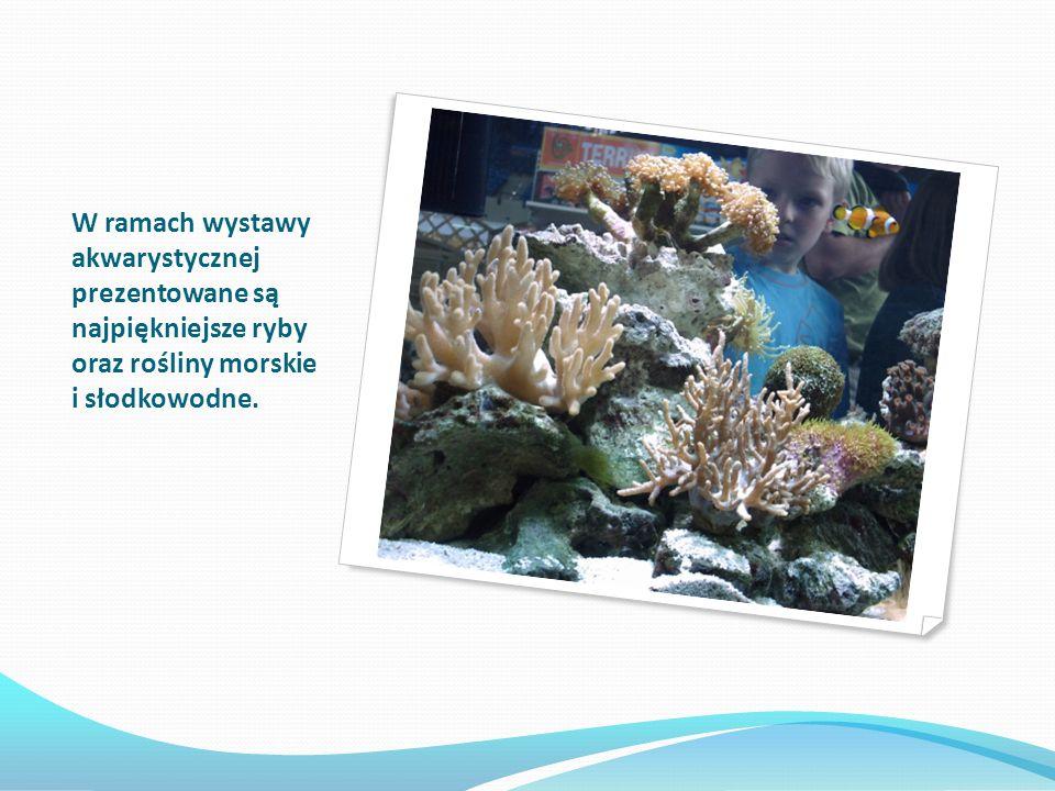 W ramach wystawy akwarystycznej prezentowane są najpiękniejsze ryby oraz rośliny morskie i słodkowodne.