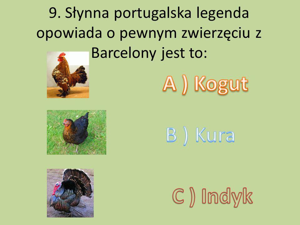 A ) Kogut B ) Kura C ) Indyk