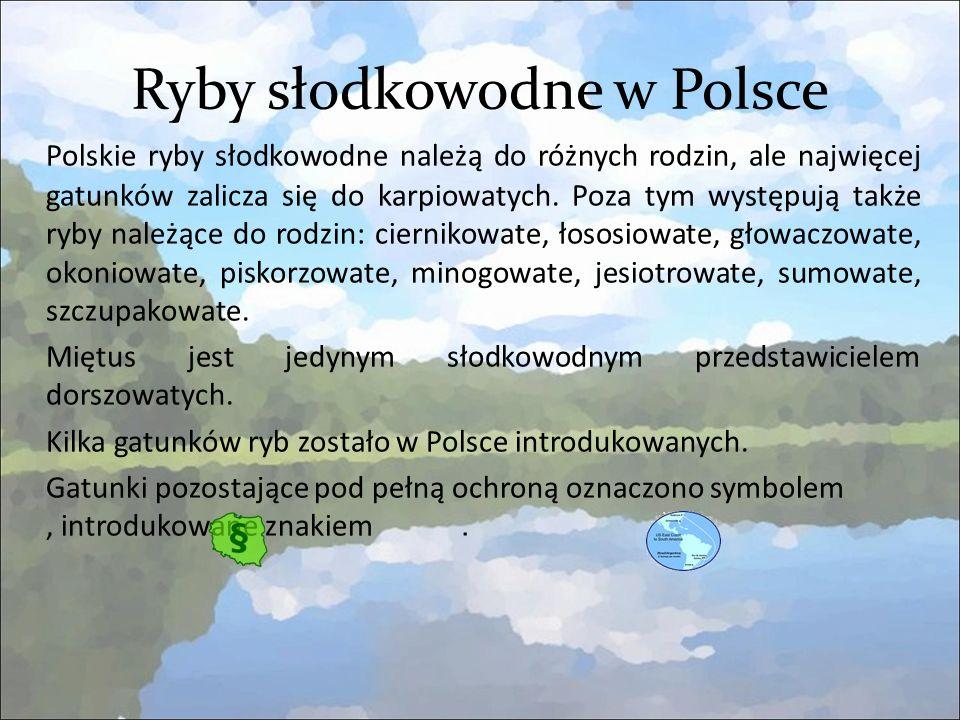 Ryby słodkowodne w Polsce