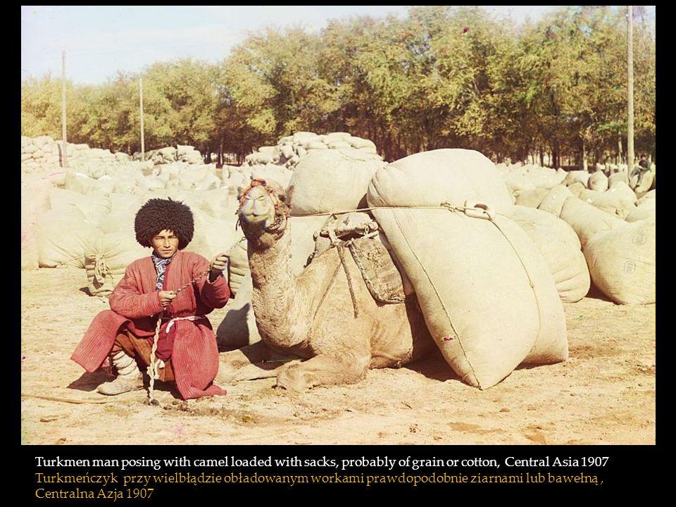 Turkmen man posing with camel loaded with sacks, probably of grain or cotton, Central Asia 1907 Turkmeńczyk przy wielbłądzie obładowanym workami prawdopodobnie ziarnami lub bawełną , Centralna Azja 1907