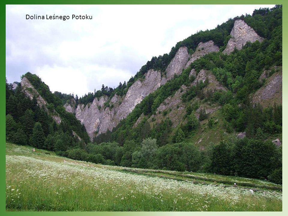 Dolina Leśnego Potoku
