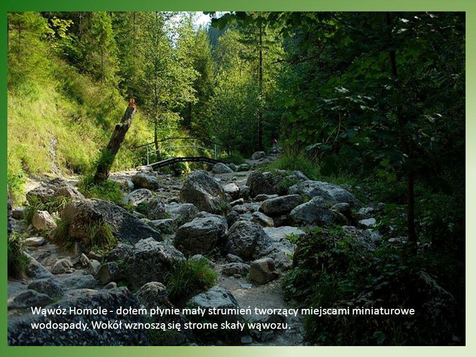 Wąwóz Homole - dołem płynie mały strumień tworzący miejscami miniaturowe wodospady.