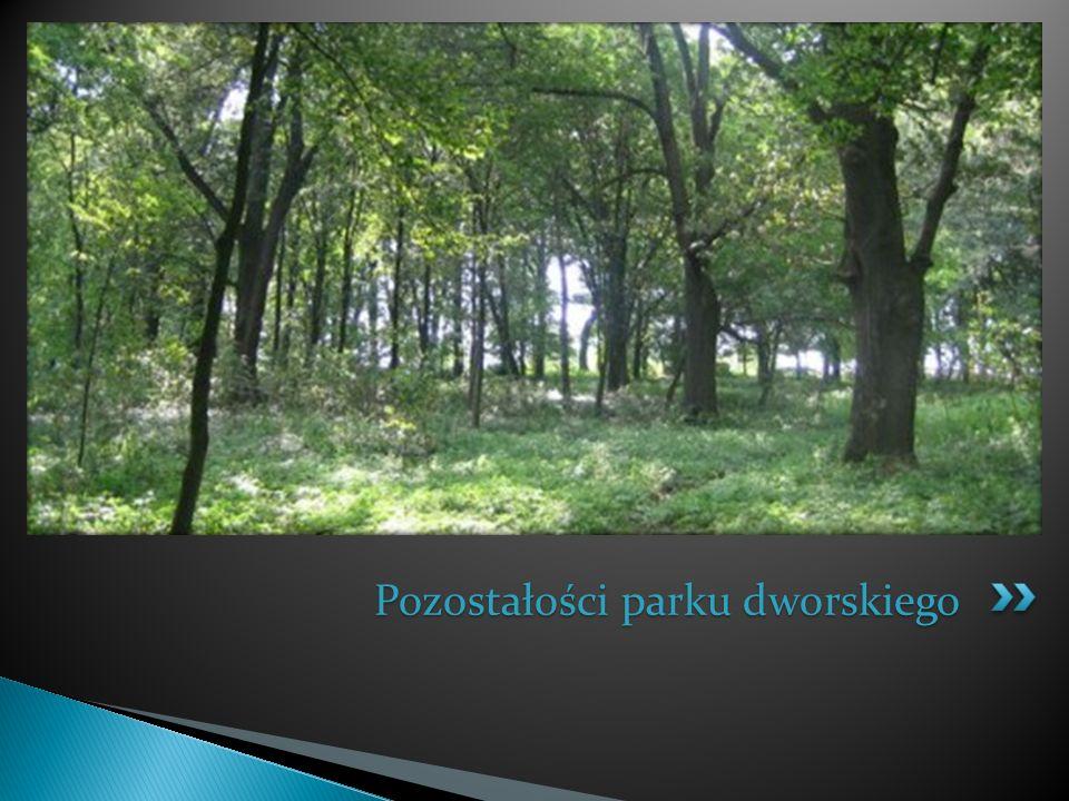 Pozostałości parku dworskiego