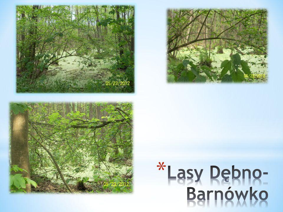 Lasy Dębno-Barnówko