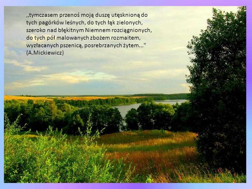 ,,tymczasem przenoś moją duszę utęsknioną do tych pagórków leśnych, do tych łąk zielonych, szeroko nad błękitnym Niemnem rozciągnionych, do tych pół malowanych zbożem rozmaitem, wyzłacanych pszenicą, posrebrzanych żytem... (A.Mickiewicz)