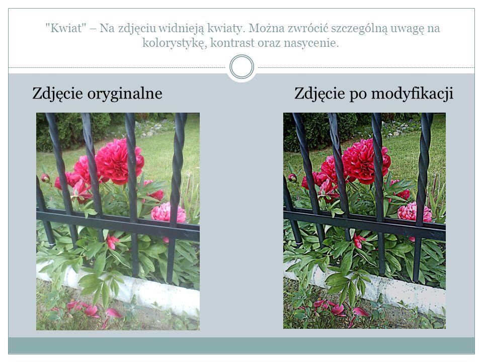 Kwiat – Na zdjęciu widnieją kwiaty
