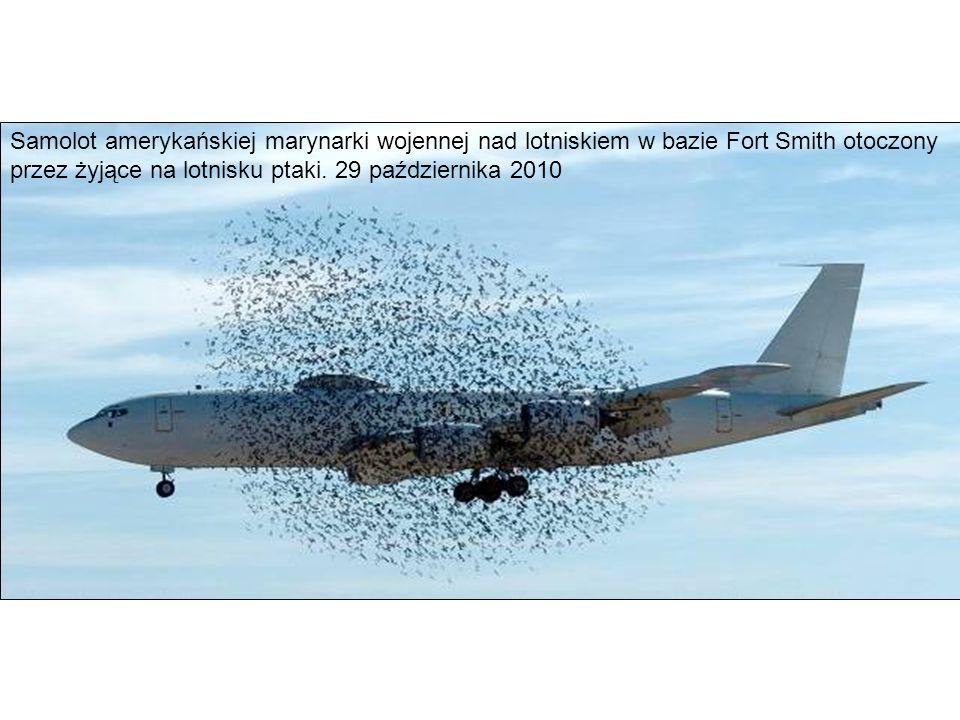Samolot amerykańskiej marynarki wojennej nad lotniskiem w bazie Fort Smith otoczony przez żyjące na lotnisku ptaki.