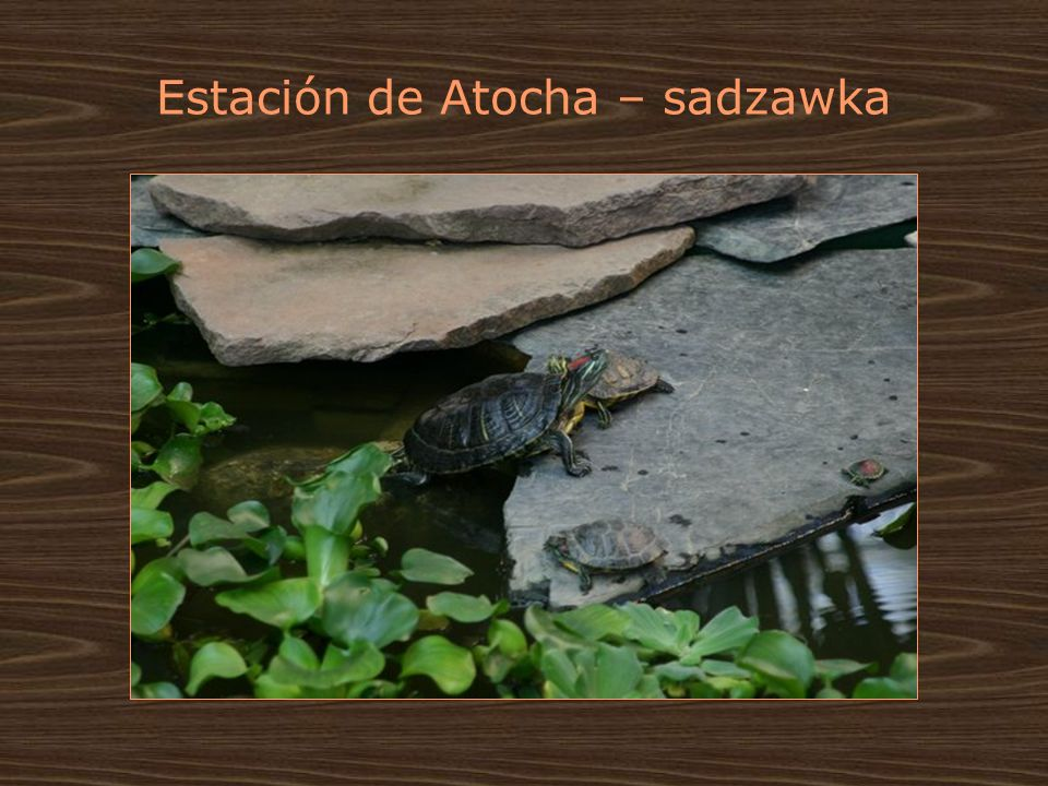 Estación de Atocha – sadzawka