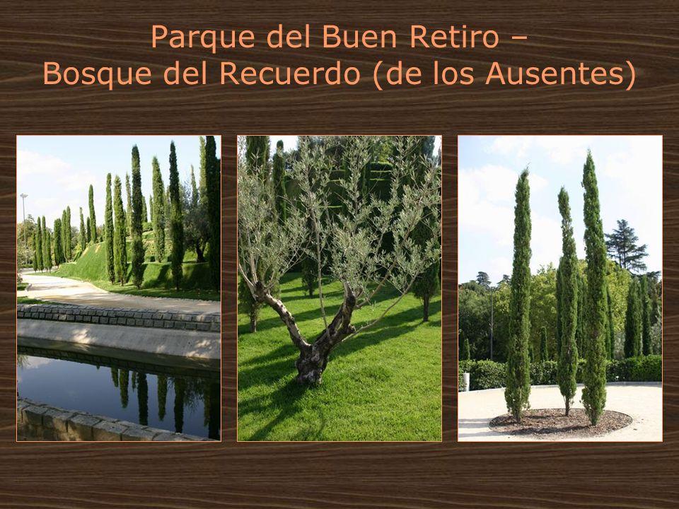 Parque del Buen Retiro – Bosque del Recuerdo (de los Ausentes)