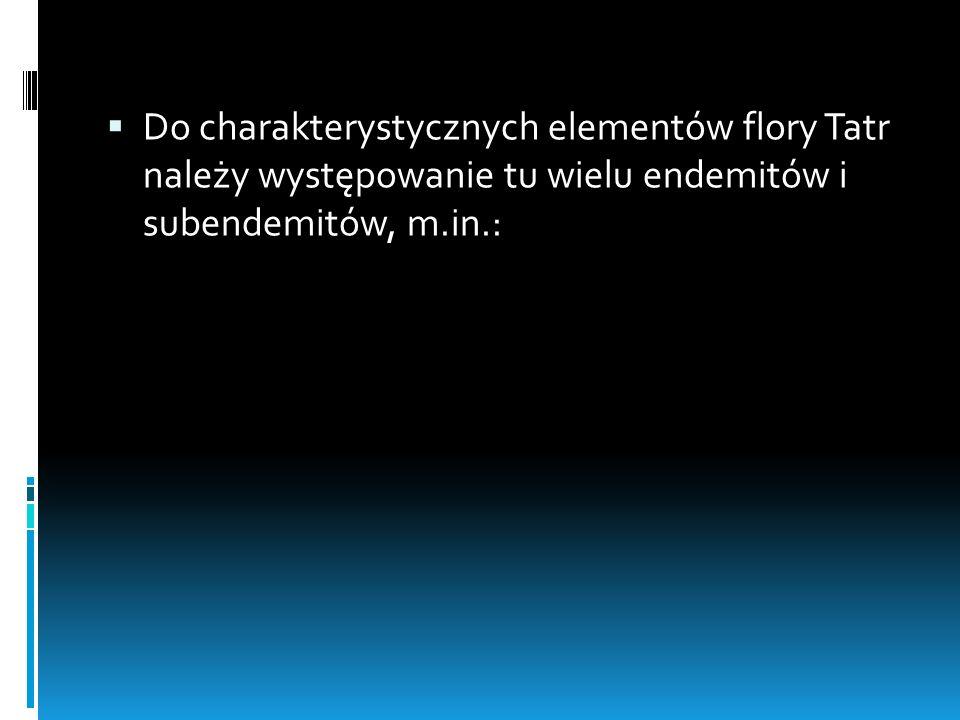 Do charakterystycznych elementów flory Tatr należy występowanie tu wielu endemitów i subendemitów, m.in.: