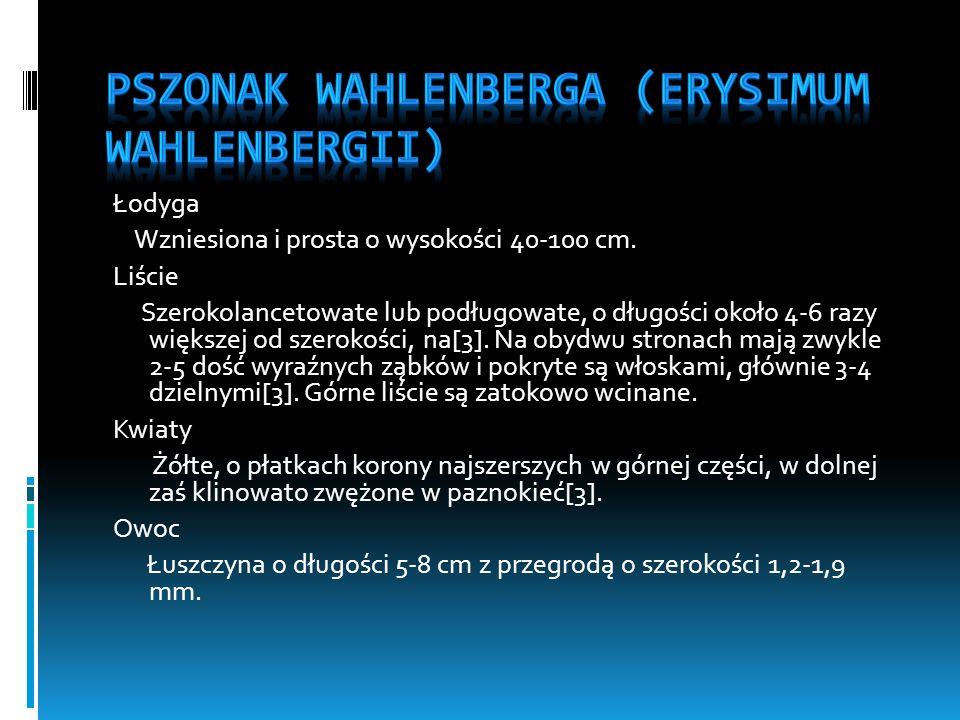 Pszonak Wahlenberga (Erysimum wahlenbergii)