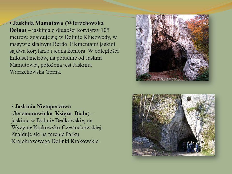 Jaskinia Mamutowa (Wierzchowska Dolna) – jaskinia o długości korytarzy 105 metrów, znajduje się w Dolinie Kluczwody, w masywie skalnym Berdo. Elementami jaskini są dwa korytarze i jedna komora. W odległości kilkuset metrów, na południe od Jaskini Mamutowej, położona jest Jaskinia Wierzchowska Górna.