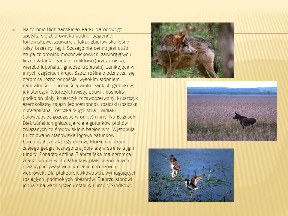 Na terenie Biebrzańskiego Parku Narodowego spotyka się zbiorowiska wodne, bagienne, torfowiskowe, szuwary, a także zbiorowiska leśne (olsy, brzeziny, łęgi).