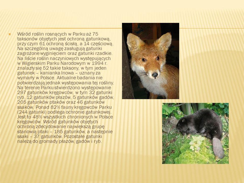 Wśród roślin rosnących w Parku aż 75 taksonów objętych jest ochroną gatunkową, przy czym 61 ochroną ścisłą, a 14 częściową.