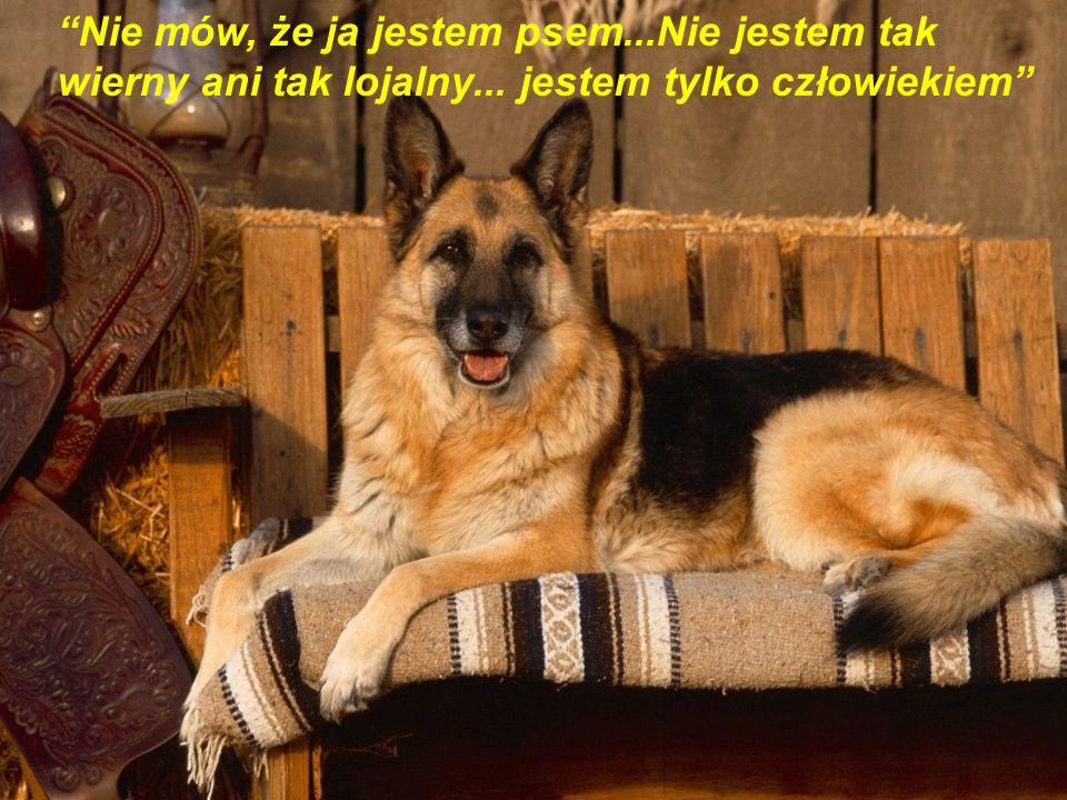 Nie mów, że ja jestem psem. Nie jestem tak wierny ani tak lojalny