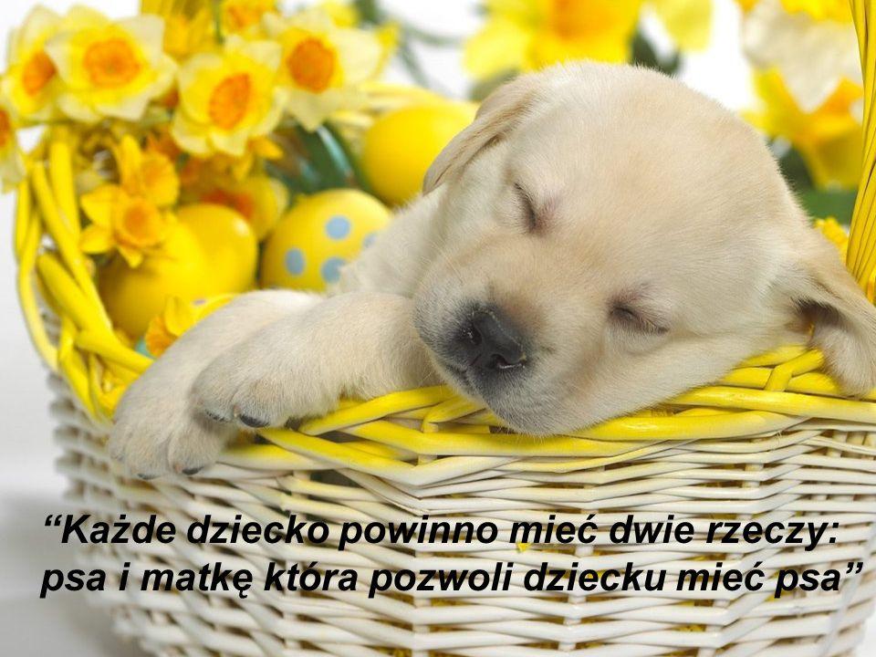 Każde dziecko powinno mieć dwie rzeczy: psa i matkę która pozwoli dziecku mieć psa