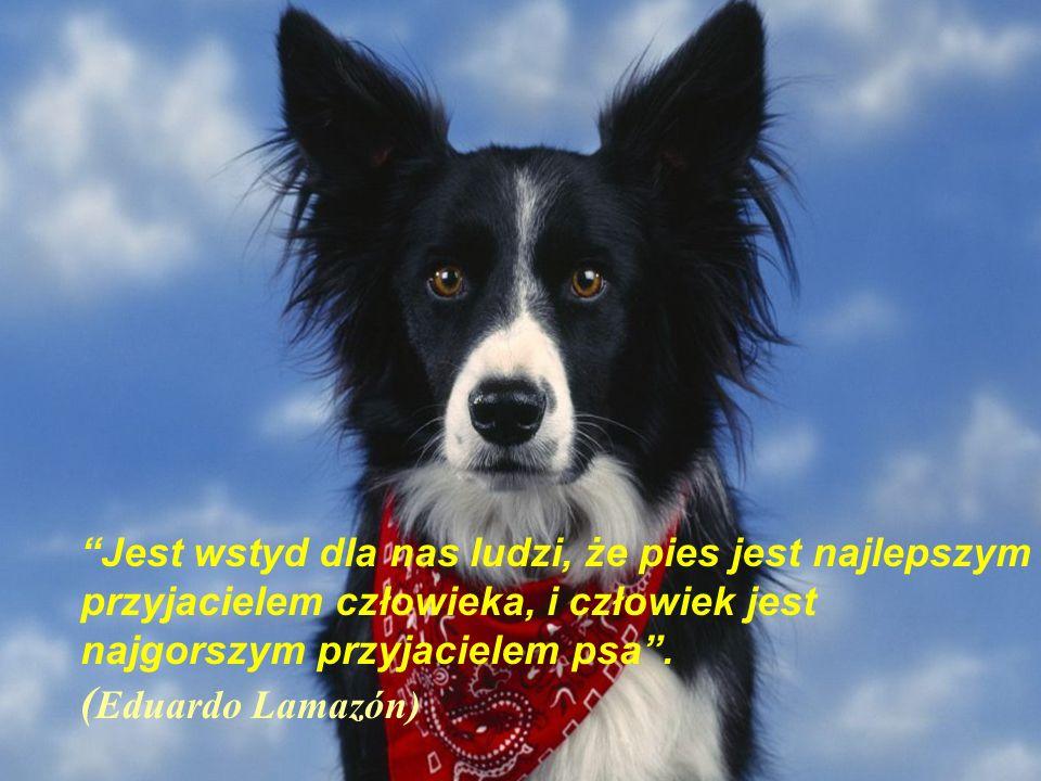 Jest wstyd dla nas ludzi, że pies jest najlepszym przyjacielem człowieka, i człowiek jest najgorszym przyjacielem psa .