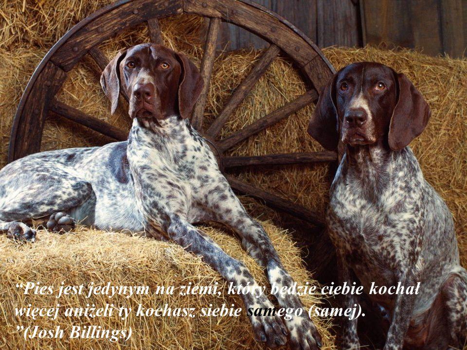 Pies jest jedynym na ziemi, który będzie ciebie kochał więcej aniżeli ty kochasz siebie samego (samej).