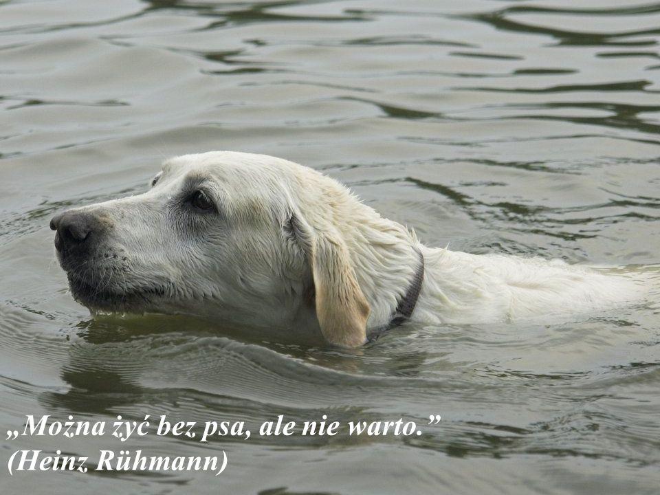 """""""Można żyć bez psa, ale nie warto. (Heinz Rühmann)"""