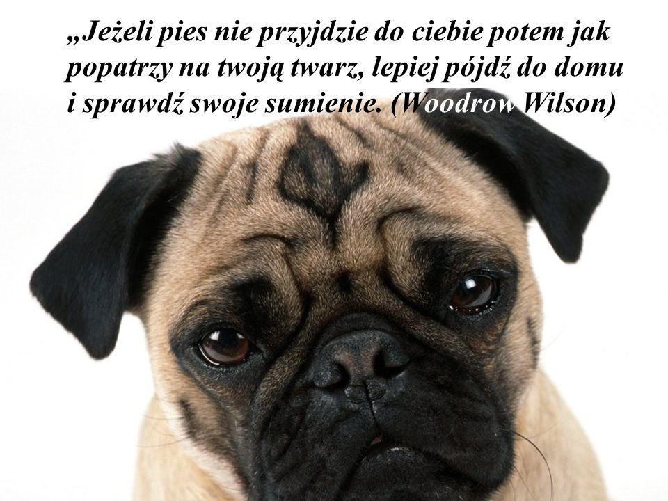 """""""Jeżeli pies nie przyjdzie do ciebie potem jak popatrzy na twoją twarz, lepiej pójdź do domu i sprawdź swoje sumienie."""