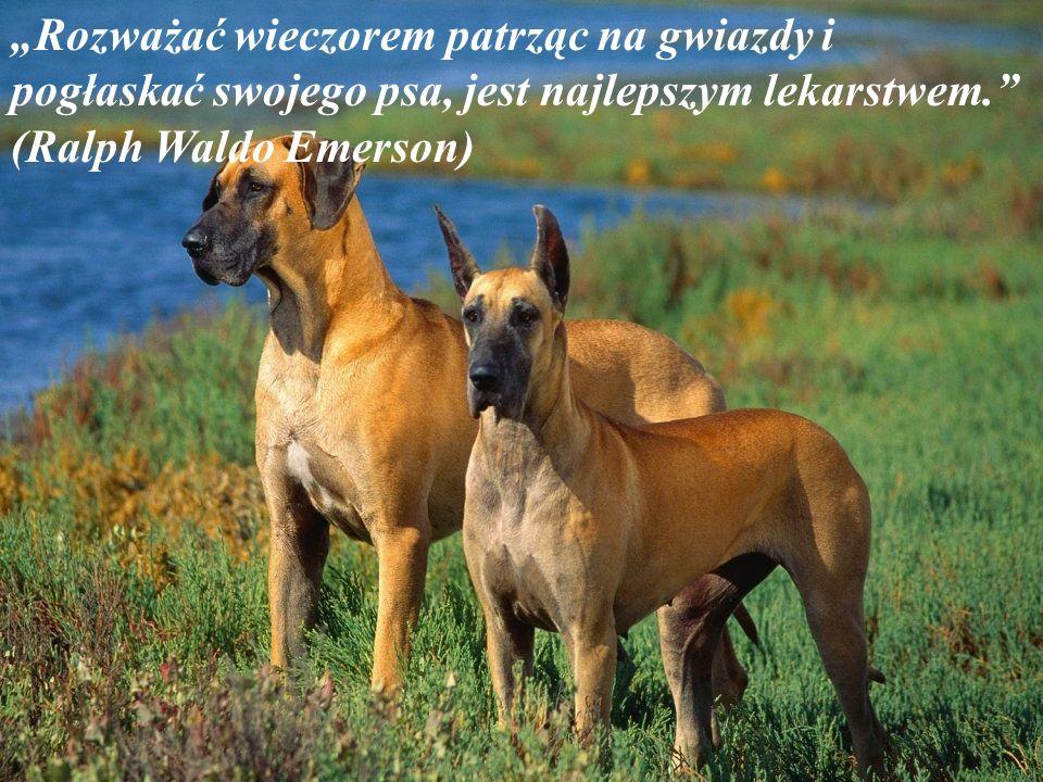 """""""Rozważać wieczorem patrząc na gwiazdy i pogłaskać swojego psa, jest najlepszym lekarstwem. (Ralph Waldo Emerson)"""