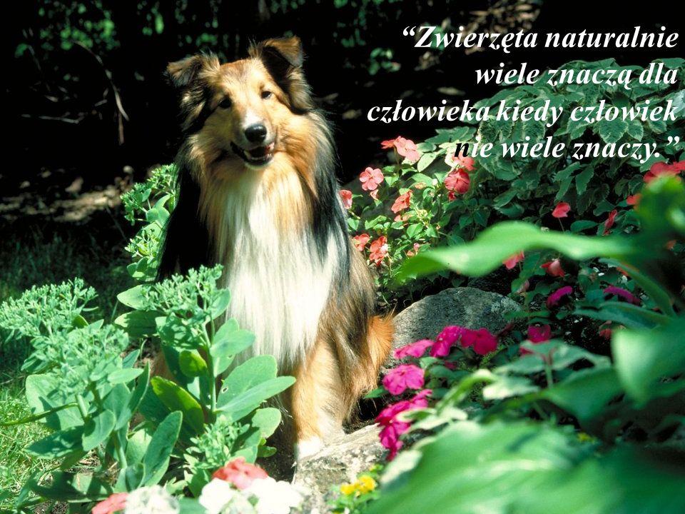 Zwierzęta naturalnie wiele znaczą dla człowieka kiedy człowiek nie wiele znaczy.