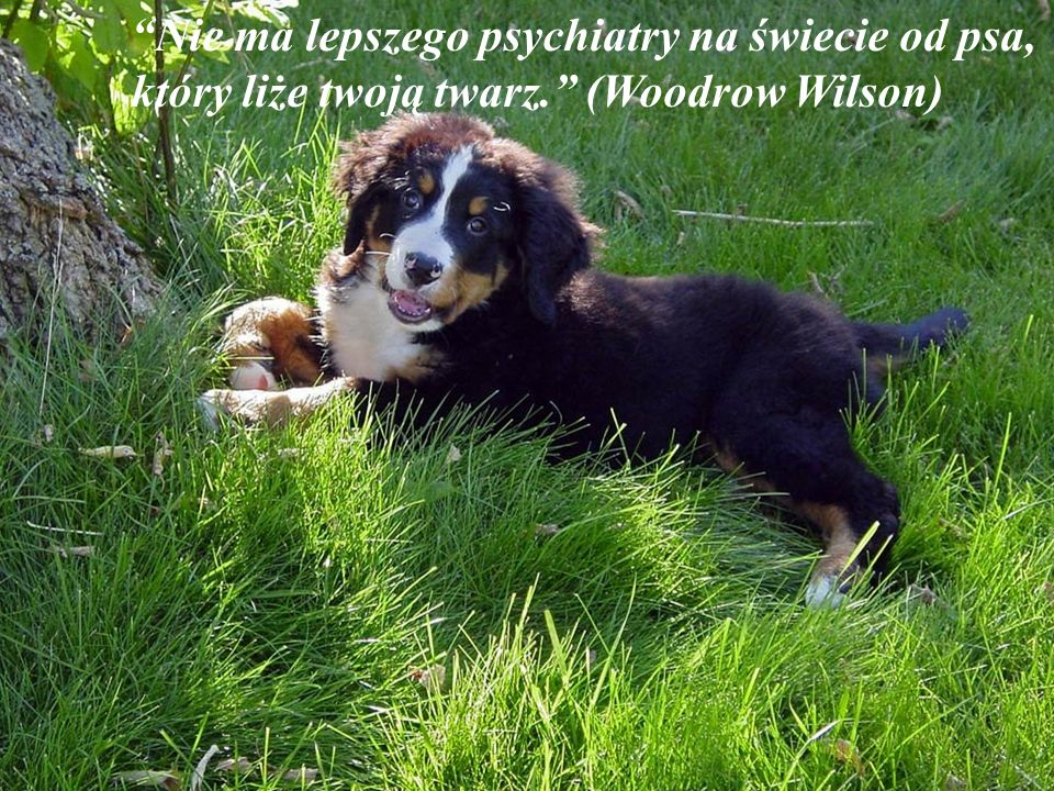 Nie ma lepszego psychiatry na świecie od psa, który liże twoją twarz