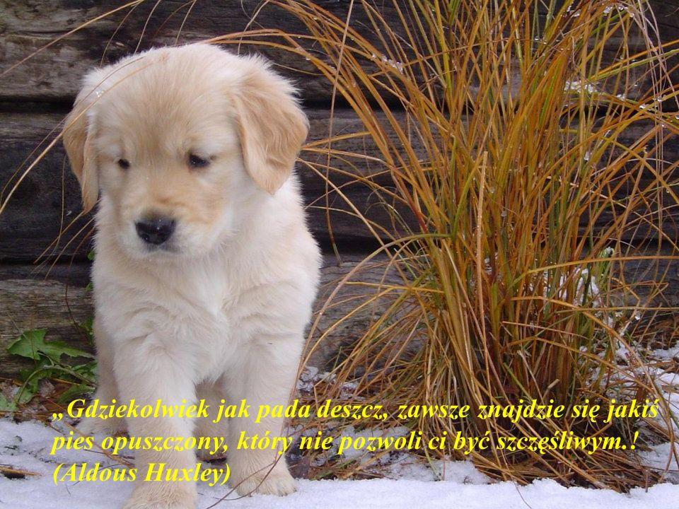 """""""Gdziekolwiek jak pada deszcz, zawsze znajdzie się jakiś pies opuszczony, który nie pozwoli ci być szczęśliwym.."""