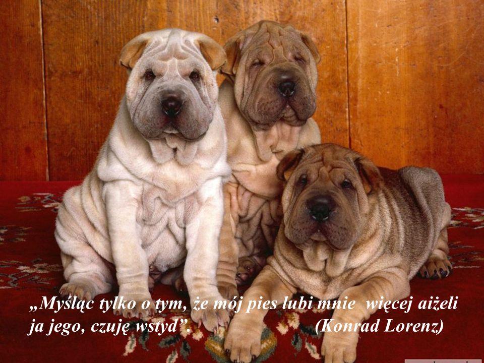 """""""Myśląc tylko o tym, że mój pies lubi mnie więcej aiżeli ja jego, czuję wstyd . (Konrad Lorenz)"""