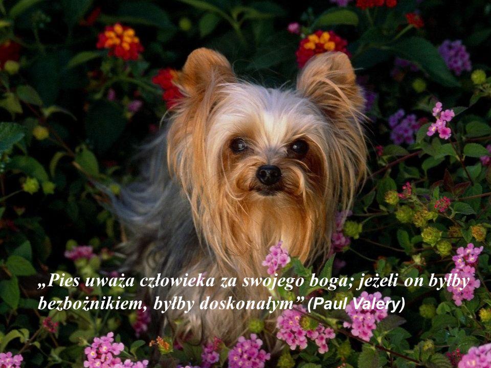 """""""Pies uważa człowieka za swojego boga; jeżeli on byłby bezbożnikiem, byłby doskonałym (Paul Valery)"""