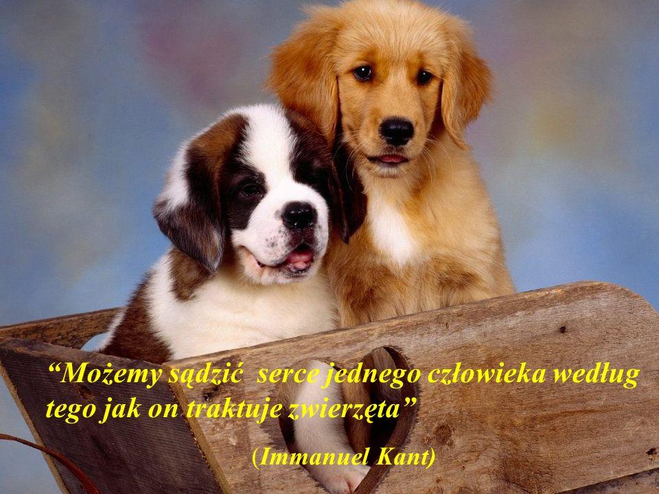 Możemy sądzić serce jednego człowieka według tego jak on traktuje zwierzęta