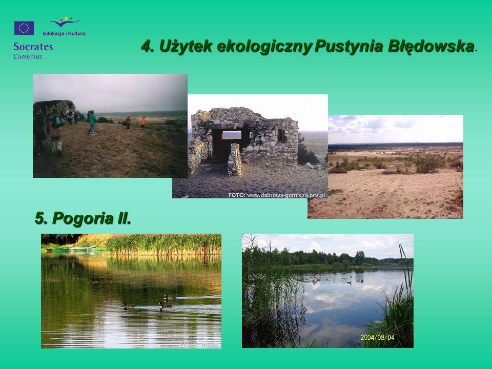 4. Użytek ekologiczny Pustynia Błędowska.