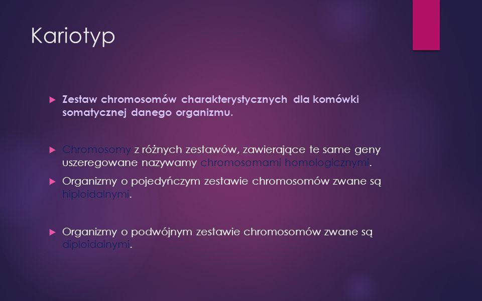 Kariotyp Zestaw chromosomów charakterystycznych dla komówki somatycznej danego organizmu.