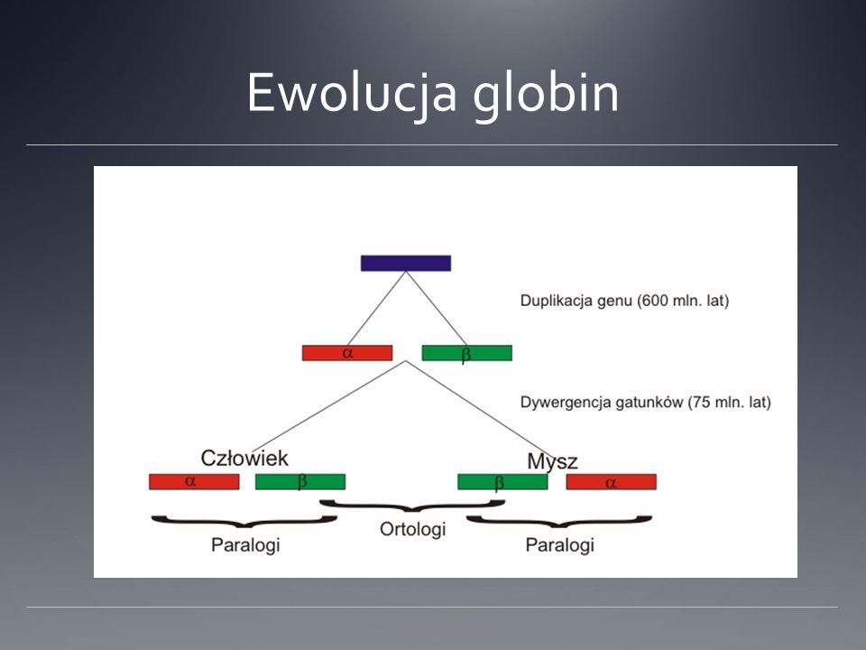 Ewolucja globin